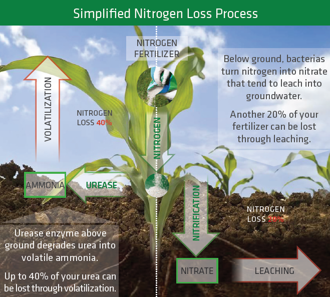 Nitrogen Loss Process - Solvay Fertilizer