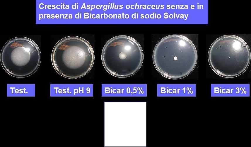 acari-fig-3