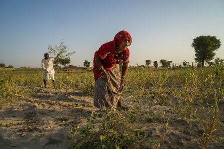 Guar farmer and his wife in their field