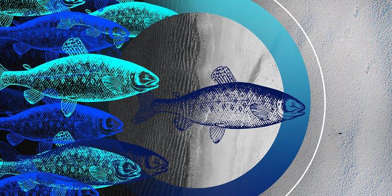 HP-Banner-Aquaculture