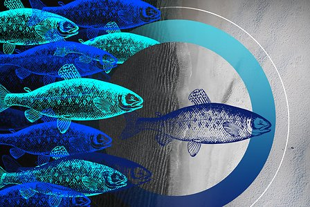 Story-Aquaculture-HEADER