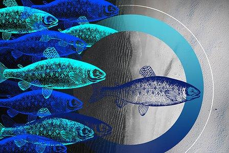 Story-Aquaculture-HEADER