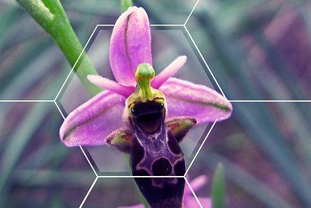 Biodiversity-HEADER-1920x1280