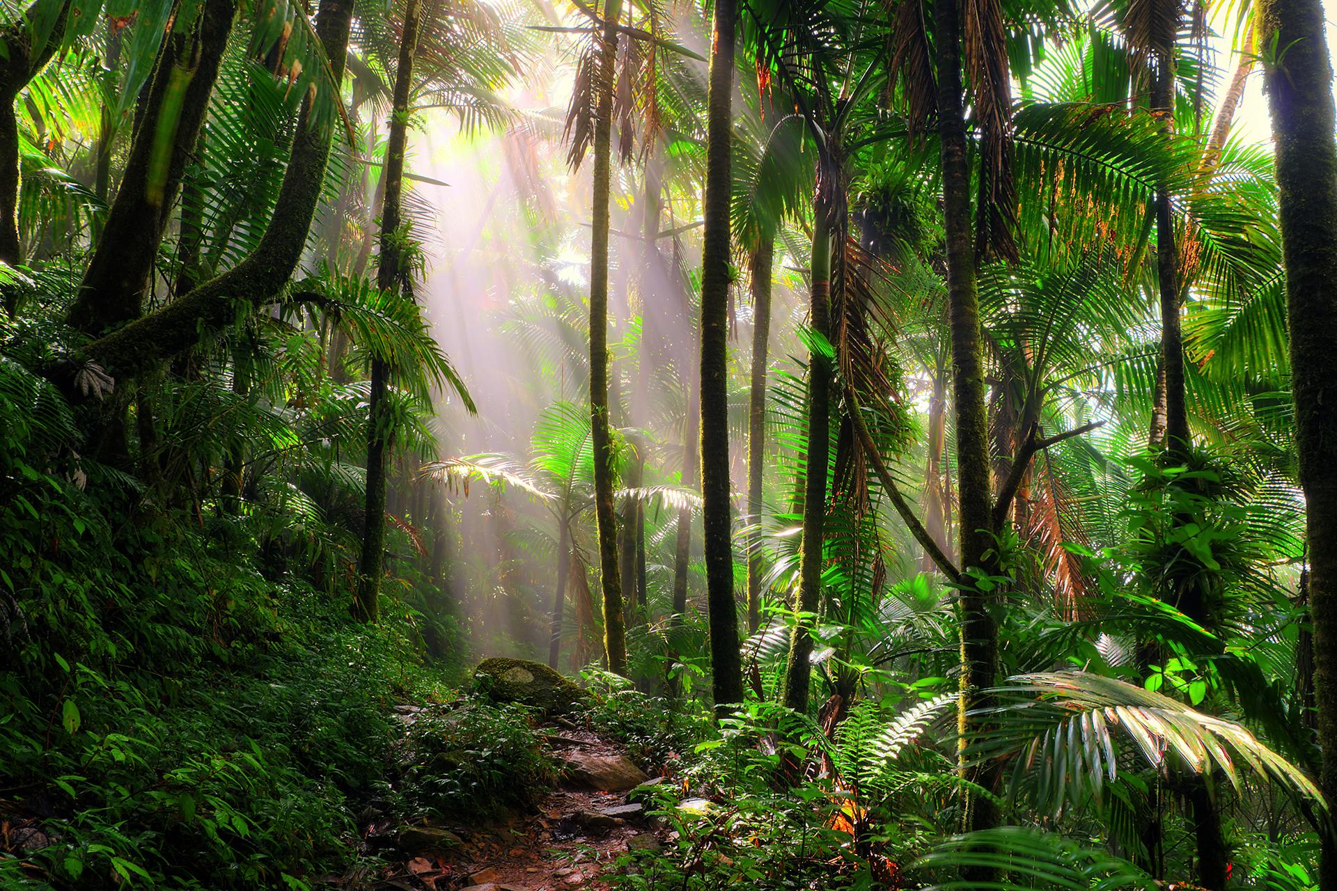 rainforest-in-brazil