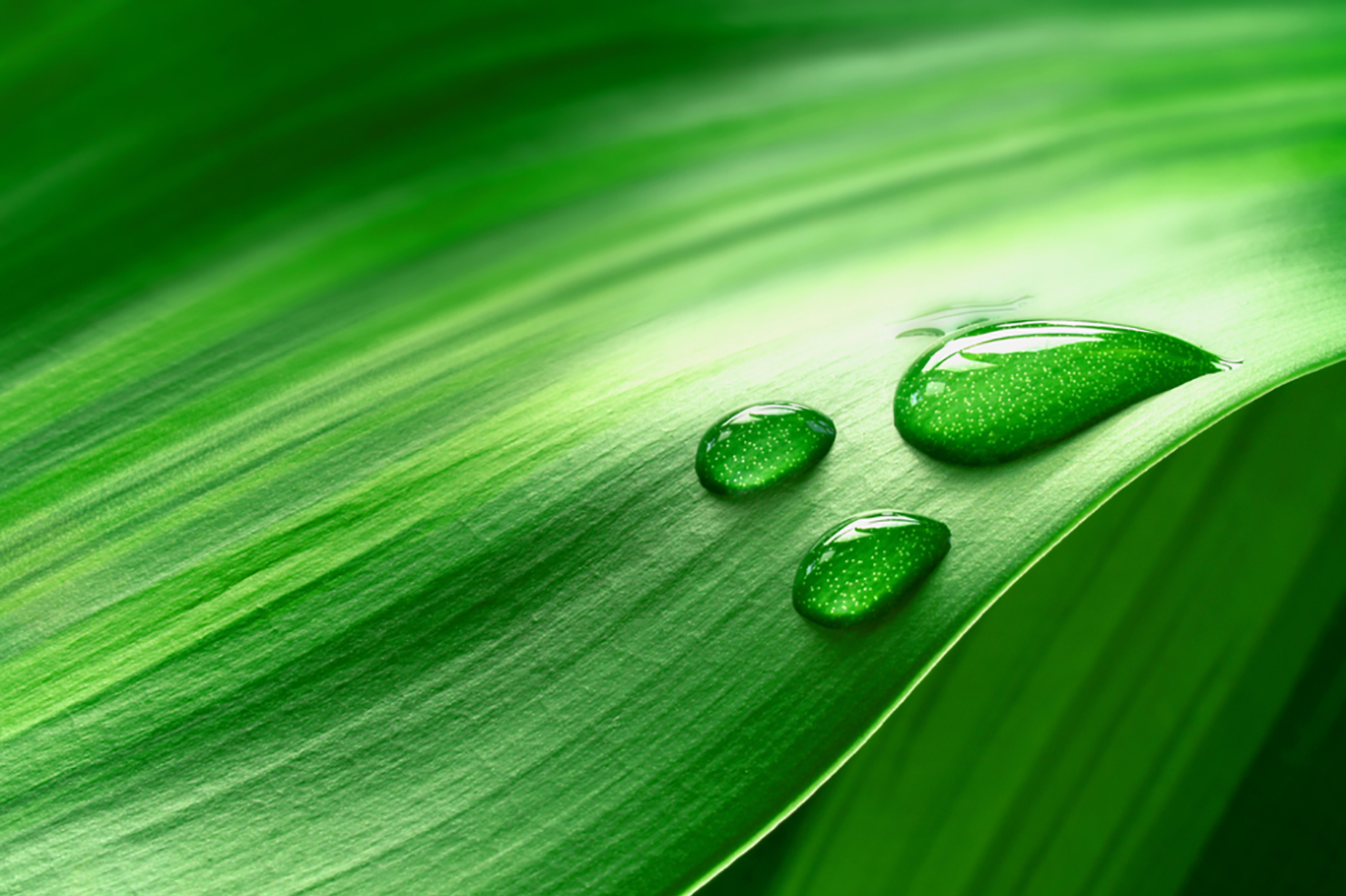 drop-of-water-on-a-light-green-leaf