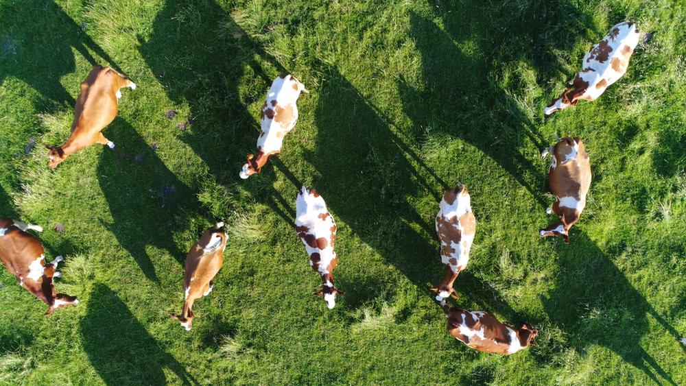 animal-feed-industry